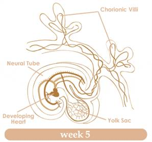 Your guide to being 5 weeks pregnant