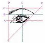 eye brow shape 2
